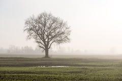 Schöne grüne Wiese im schweren Nebel Lizenzfreies Stockbild