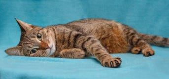 Schöne graue gestreifte Katze lizenzfreies stockfoto