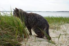 Schöne graue Katze auf dem Strand Stockbilder