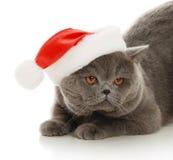 Schöne graue Katze in einer Schutzkappe des neuen Jahres Stockfoto