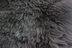 Schöne graue Wolle für Hintergrund Stockfoto