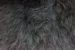 Schöne graue Wolle für Hintergrund Stockfotografie