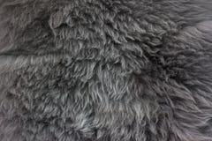 Schöne graue Wolle für Hintergrund Stockbilder