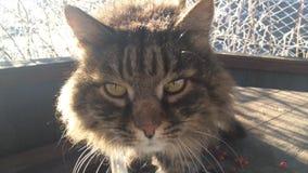Schöne große Katze, die auf dem Straßenwinter sitzt stock footage