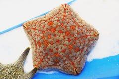 Schöne große Starfish im Wasserpflanzeabschluß oben lizenzfreie stockfotografie