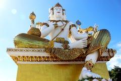 Schöne große weiße Farbe der Gestaltung von Brahma auf Tageslicht mit blauer Himmel-Hintergrund Stockfotografie
