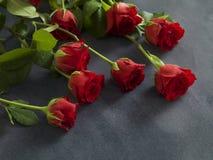 Schöne Gruppe Rosen auf einem grauen Hintergrund Lizenzfreies Stockbild