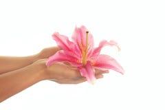 Schöne Hände mit einer rosafarbenen Lilie mit Exemplarplatz Lizenzfreie Stockfotos