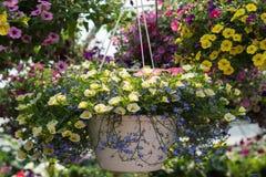 Schöne hängende Blumen lizenzfreie stockfotos
