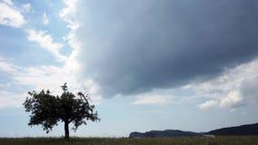 Schöne Hügel und Waldpanorama stock video footage