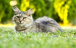 Schöne haarige Katze Stockbild