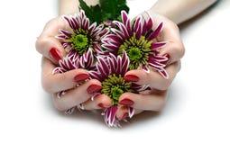 Schöne Hand mit roter Maniküre und Blumen stockbild
