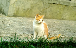 Schöne Haustierkatze stockfoto