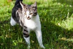 Schöne Haustierkatze Stockbild