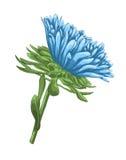 Schöne helle blaue Aster mit Aquarelleffekt lokalisiert auf weißen Hintergrund vektor abbildung