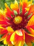 Schöne helle Blume Stockbild