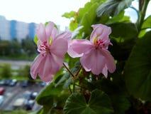 Schöne helle Blume auf einem Hintergrund von Häusern Lizenzfreies Stockfoto