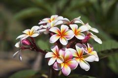 Schöne helle Blumen Lizenzfreies Stockfoto