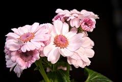 Schöne helle Rosa-Blumen Stockfotos