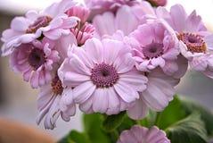 Schöne helle Rosa-Blumen Lizenzfreie Stockfotografie
