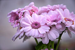 Schöne helle Rosa-Blumen Lizenzfreies Stockbild