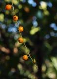 Schöne hellpurpurne tropische Blume Lizenzfreie Stockfotos