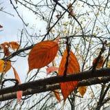 Schöne Herbstanlage Stockfotos
