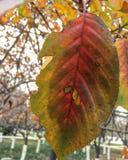 Schöne Herbstanlage Lizenzfreies Stockfoto