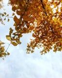 Schöne Herbstanlage Stockbild