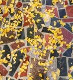 Schöne Herbstanlage Stockfotografie