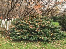 Schöne Herbstanlage Lizenzfreie Stockfotografie