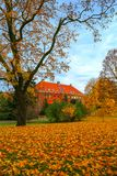Schöne Herbstbäume Stockfotos