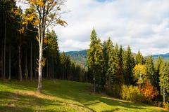 Schöne Herbstbäume Stockbild