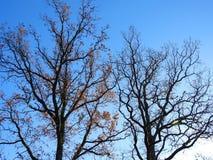 Schöne Herbstbäume, Litauen Lizenzfreies Stockfoto