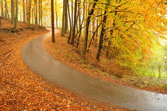 Schöne Herbstbäume und -straße Stockfotos