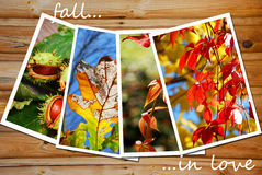Schöne Herbstbildsammlung Lizenzfreies Stockbild