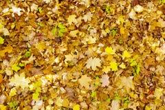 Schöne Herbstblätter Stockbild