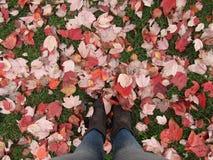 Schöne Herbstblätter Stockfotos