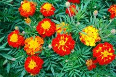 Schöne Herbstblumen Stockbild