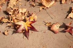 Schöne Herbstfarben Lizenzfreies Stockfoto