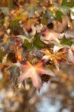 Schöne Herbstfarben Lizenzfreies Stockbild