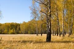 Schöne Herbstlandschaft lizenzfreies stockbild