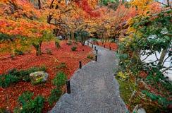Schöne Herbstlandschaft des bunten Laubs der brennenden Ahornbäume und gefallene Blätter durch einen Kies schleppen im Garten in  Stockfotografie