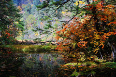 Schöne Herbstlandschaft im Hailuogou-Gletscherpark Stockbild