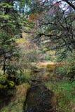 Schöne Herbstlandschaft im Hailuogou-Gletscherpark Lizenzfreie Stockbilder