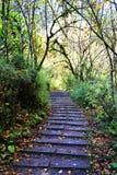 Schöne Herbstlandschaft im Hailuogou-Gletscherpark Stockbilder