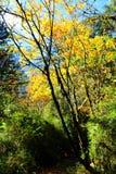 Schöne Herbstlandschaft im Hailuogou-Gletscherpark Stockfotos