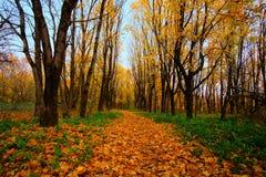 Schöne Herbstlandschaft im Park stockbild