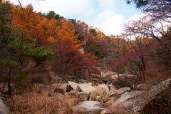 Schöne Herbstlandschaft Laoshan-Berges von China Stockfotografie
