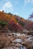 Schöne Herbstlandschaft Laoshan-Berges von China Stockbilder